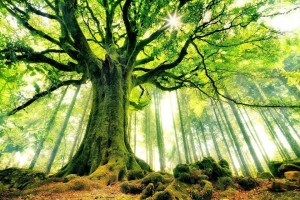 Earth Mother Tree  @TreeSisters: women seeding change