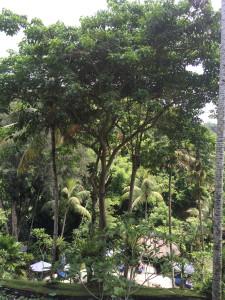 Hotel Tjampuhan, Ubud Bali Mara's picture